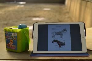 Anatomie module - cursus anatomie bij paarden
