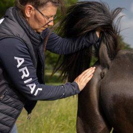 assessment van het paard