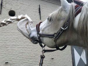 Anatomie & Biomechanica Combi dag @ Horse Awareness Centrum