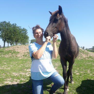 Onze paarden moeten sterker, steviger niet soepeler