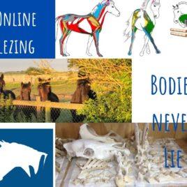 Bodies Never Lie Online Lezing (Nederlands gesproken)