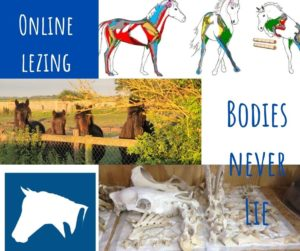 Online Interactieve lezing Bodies Never Lie (Nederlands)