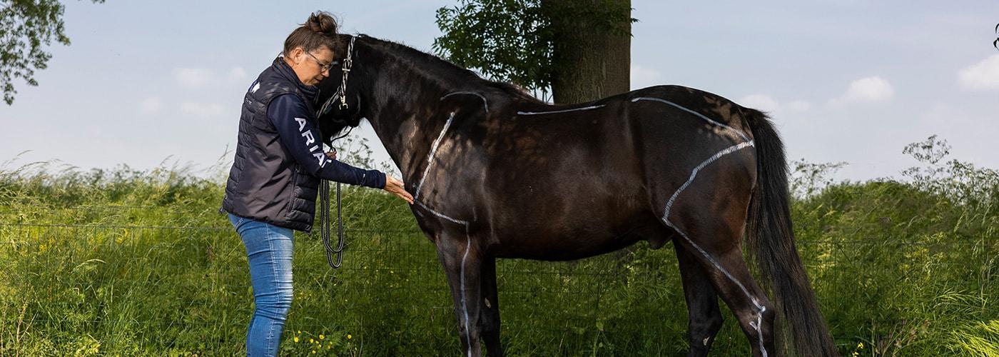 mastery horse gait analysis